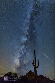 KS-Saguaro-Starry-Night
