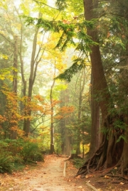 Karen Evans_A Precious Forest