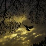 Lamb_Jennifer_Sunset Swoop