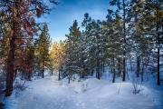 Larry Scherban_Summerland Trail