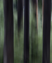 Terry_Beaupre_Emerald Forest