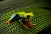5_AmphibianStare_Cairns